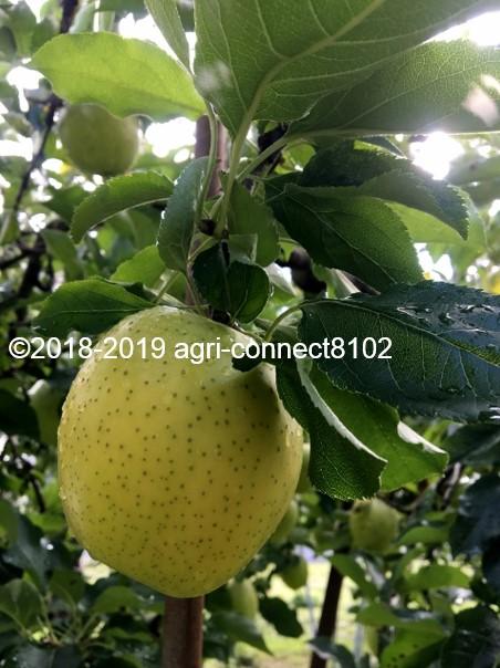 f:id:agri-connect:20191107211654j:plain