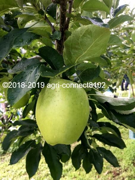 f:id:agri-connect:20191107211704j:plain