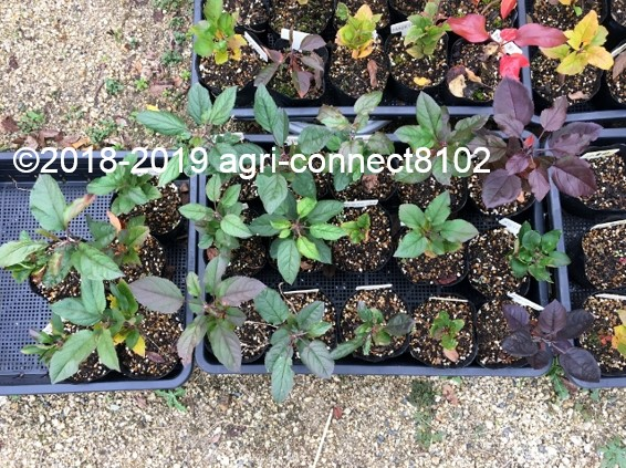 f:id:agri-connect:20191126223425j:plain