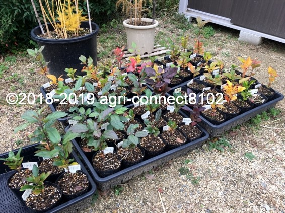 f:id:agri-connect:20191126224521j:plain