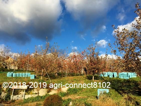 f:id:agri-connect:20191205230446j:plain