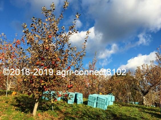 f:id:agri-connect:20191205230502j:plain