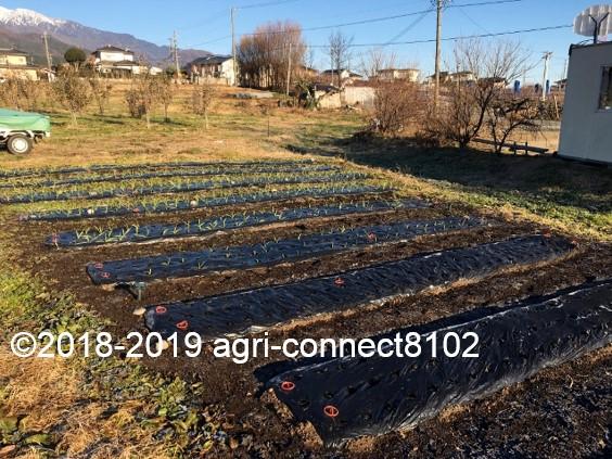 f:id:agri-connect:20191218222937j:plain