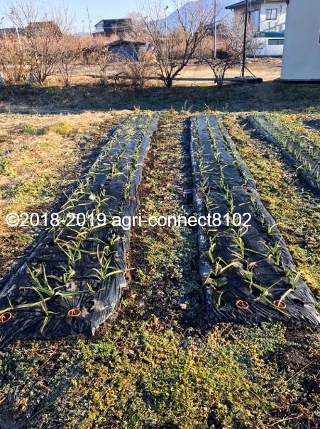 f:id:agri-connect:20191218223403j:plain