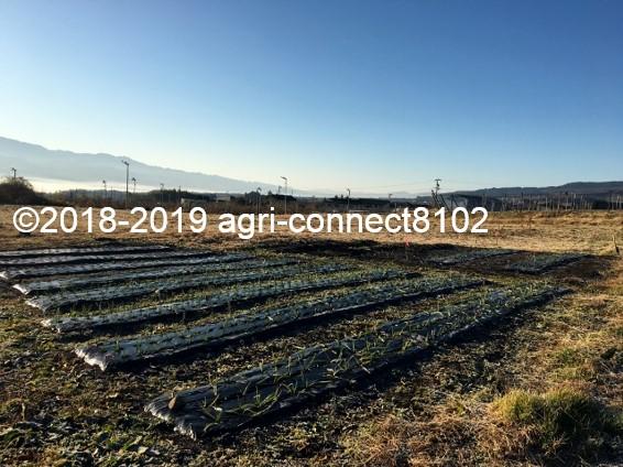 f:id:agri-connect:20191218224639j:plain