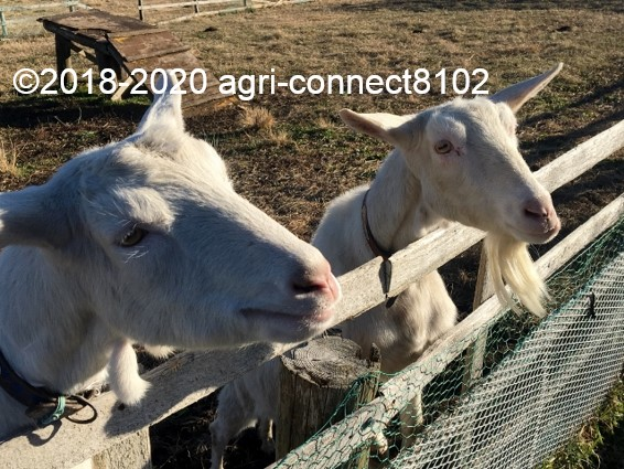 f:id:agri-connect:20200103223654j:plain