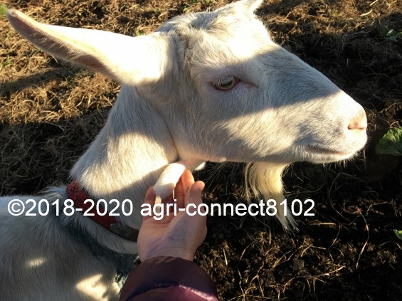 f:id:agri-connect:20200103223701j:plain