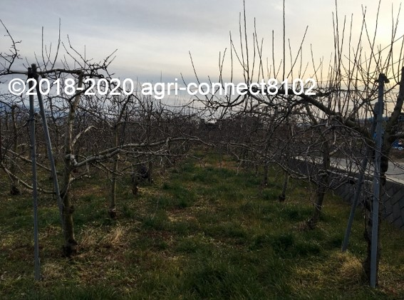 f:id:agri-connect:20200130224950j:plain
