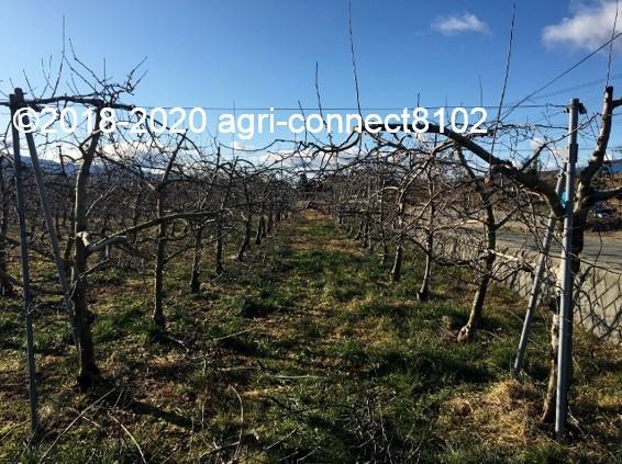 f:id:agri-connect:20200130225004j:plain