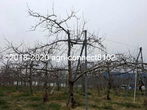 f:id:agri-connect:20200130230334j:plain