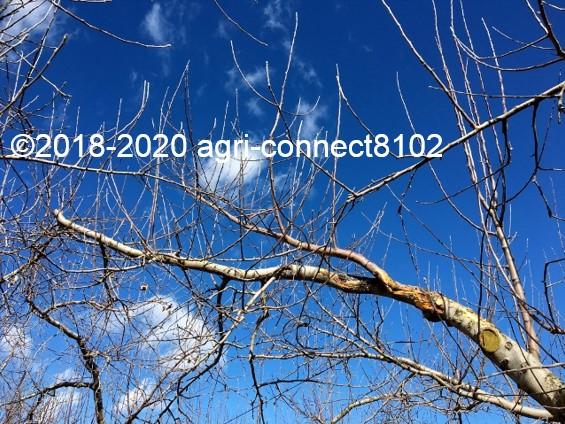f:id:agri-connect:20200201220945j:plain
