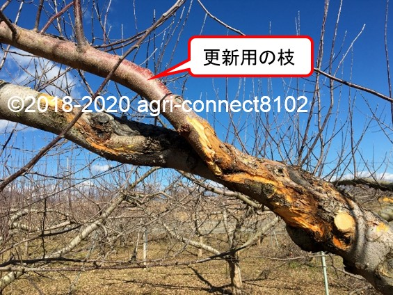 f:id:agri-connect:20200201220957j:plain