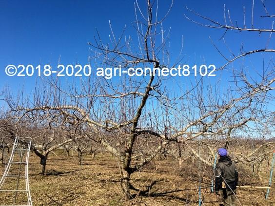 f:id:agri-connect:20200201221024j:plain
