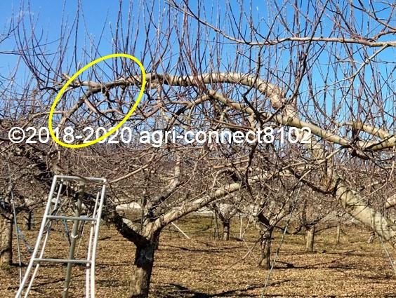 f:id:agri-connect:20200201221036j:plain