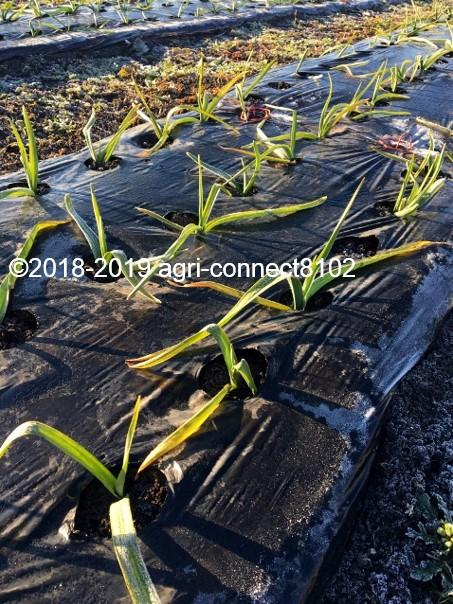 f:id:agri-connect:20200207211546j:plain