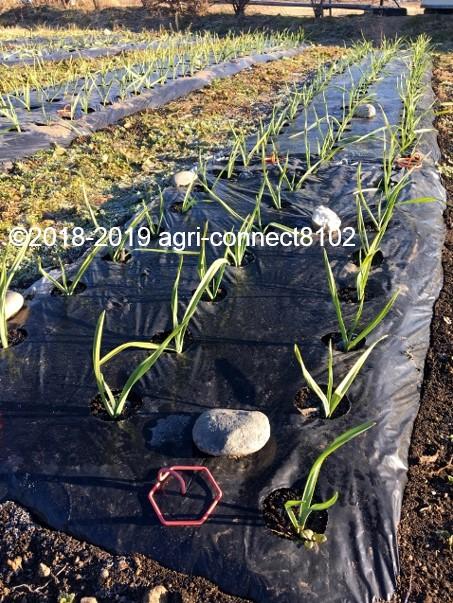 f:id:agri-connect:20200207211558j:plain