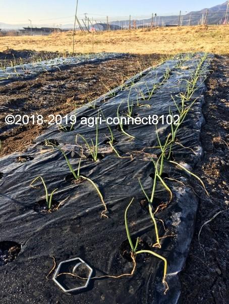 f:id:agri-connect:20200207211609j:plain