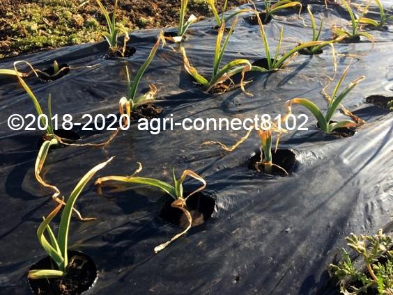 f:id:agri-connect:20200207212403j:plain