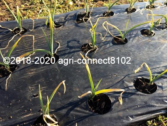 f:id:agri-connect:20200207212422j:plain