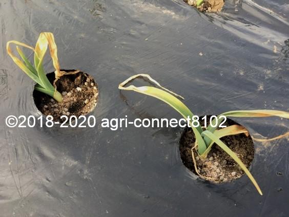f:id:agri-connect:20200210223104j:plain