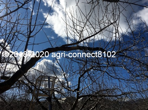 f:id:agri-connect:20200211210622j:plain