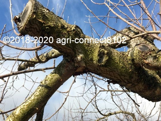 f:id:agri-connect:20200211213441j:plain