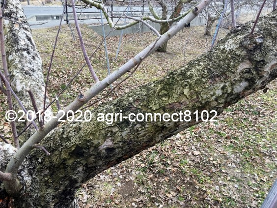 f:id:agri-connect:20200223214642j:plain