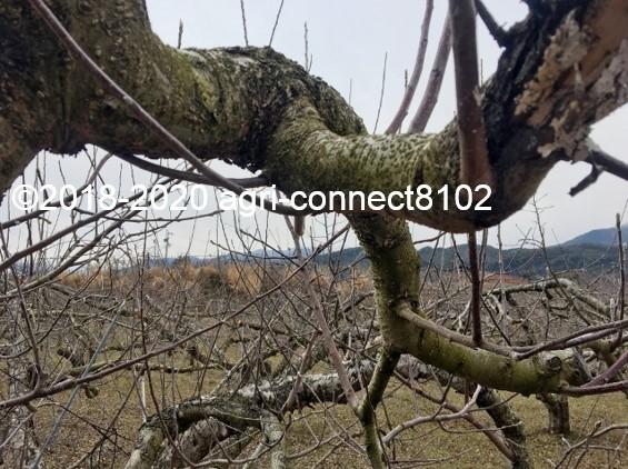 f:id:agri-connect:20200223214654j:plain