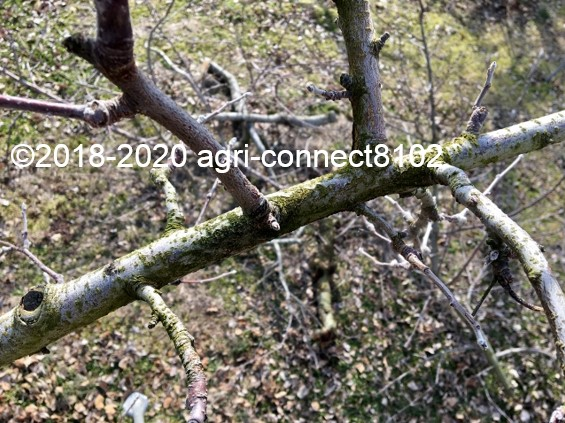 f:id:agri-connect:20200223214704j:plain