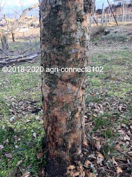 f:id:agri-connect:20200223214901j:plain
