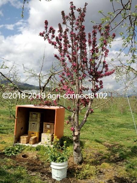 f:id:agri-connect:20200227210649j:plain