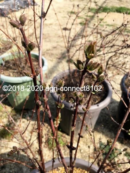 f:id:agri-connect:20200316222427j:plain