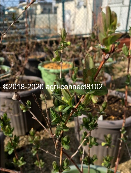 f:id:agri-connect:20200316222451j:plain