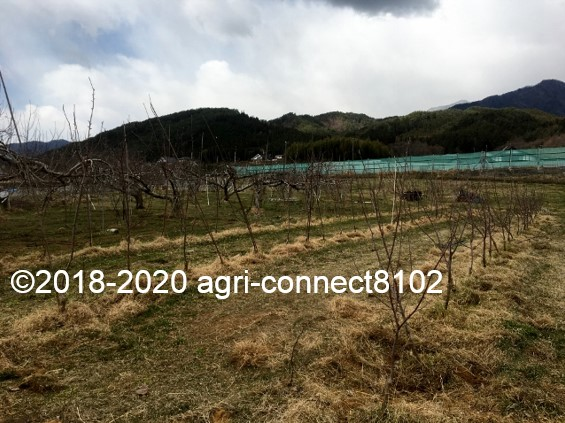 f:id:agri-connect:20200328220525j:plain