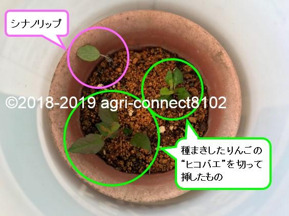 f:id:agri-connect:20200412202215j:plain