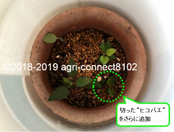f:id:agri-connect:20200412202225j:plain