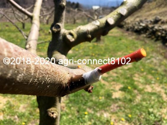 f:id:agri-connect:20200412212523j:plain