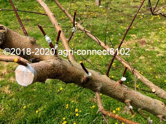 f:id:agri-connect:20200412212532j:plain