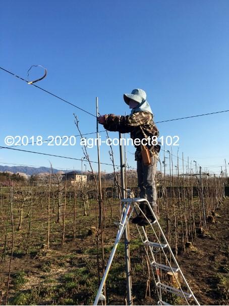 f:id:agri-connect:20200412213019j:plain