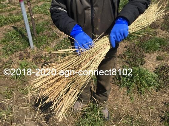 f:id:agri-connect:20200414225304j:plain