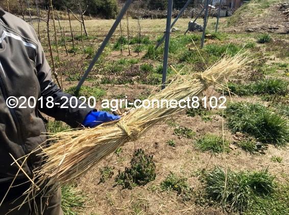 f:id:agri-connect:20200414225644j:plain