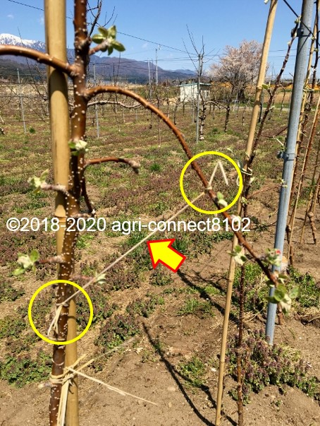 f:id:agri-connect:20200414230421j:plain