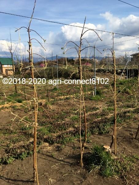 f:id:agri-connect:20200414230432j:plain