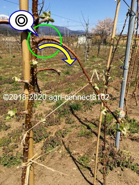f:id:agri-connect:20200414234733j:plain