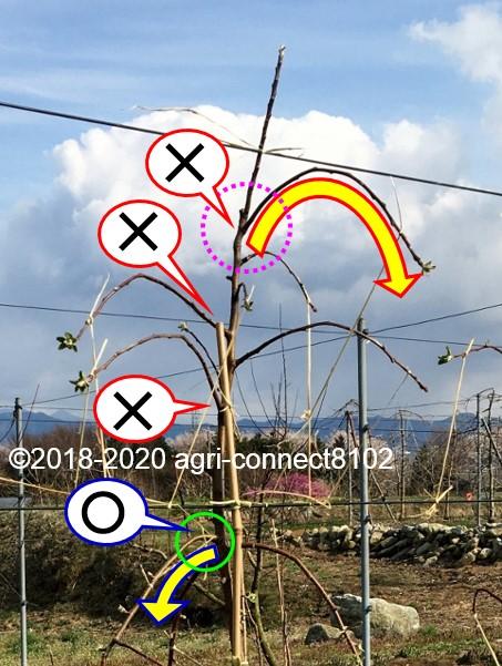 f:id:agri-connect:20200414234742j:plain