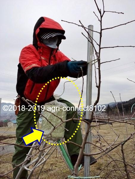 f:id:agri-connect:20200415224035j:plain