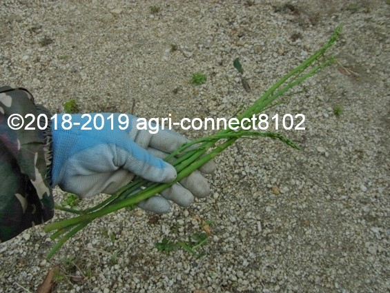 f:id:agri-connect:20200417114557j:plain