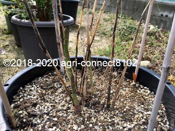 f:id:agri-connect:20200417114622j:plain