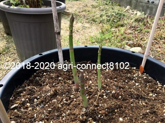 f:id:agri-connect:20200417114632j:plain