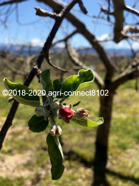 f:id:agri-connect:20200419234208j:plain